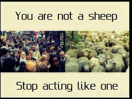 you are not a sheep